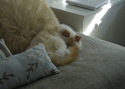 Mi Gato Cojin